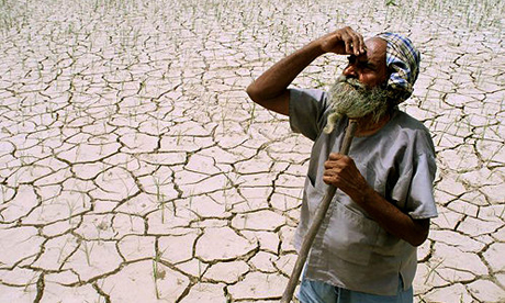An Indian farmer looks towards the sky, while standing amidst his drought-stricken crop. US company S2C Global Systems hopes to ship water from Alaska to India. Photograph: Dipak Kumar/Reuters