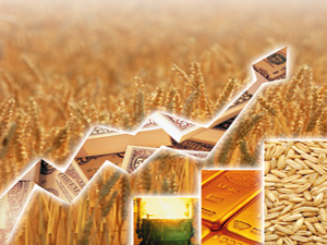Commodity Trends: Pulses rise on demand, oilseeds on global cues