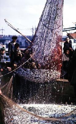 Greenpeace Turkey campaign seeks to prevent loss of fish stocks
