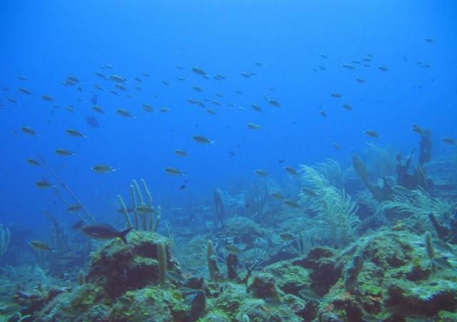 MEPC Designates Saba Bank as Particularly Sensitive Sea Area