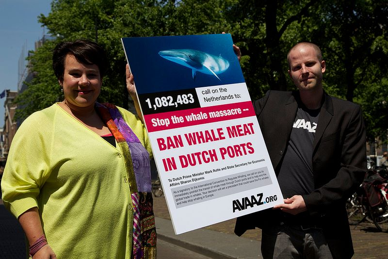 Rotterdam moves to halt whale trade, despite lack of risk to species