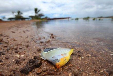 Hawaii grand jury seeks Matson documents in Honolulu molasses spill