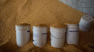 China again rejects two US distillers grain cargoes over GM