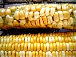 US corn shipments to China slow after rejections over GM