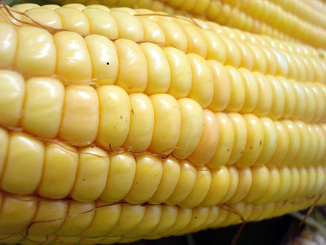 China okays US imports of GM corn, but blocks American distillers grain