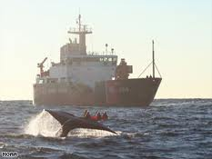 US federal eco agency tells ships to slow after three whales spotted