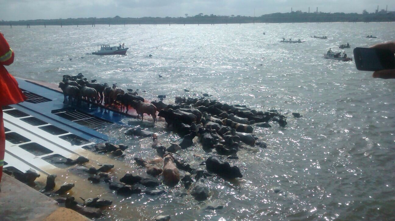 Livestock carrier Haidar capsized in port, 5000 animals killed