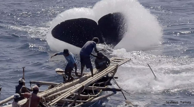 This new technology can save whales from ship collisions